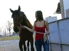 Im pferdestall ficken Freies Tiergeschlecht,